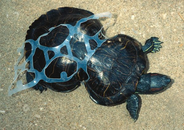 Plastic Pollution in our Ocean