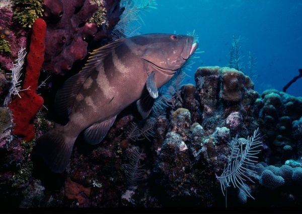 The Best Coral Reefs In The Caribbean: A Guide For Eco-Divers