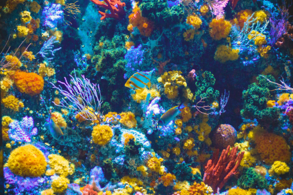 What Are the Most Common Threats to Coral Reefs?
